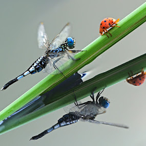 reflection by Shikhei Goh II - Animals Insects & Spiders