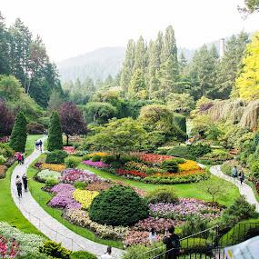 Sunken Garden by Gabriela Zandomeni - Flowers Flower Gardens
