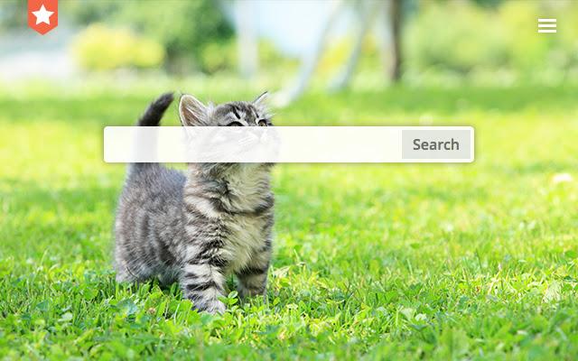 Cat walk. New tab
