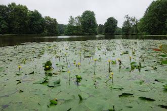 Photo: Dans le Parc de Soucy à Fontenay-les-Briis