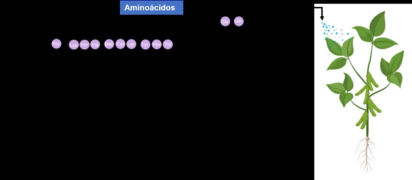 Importância dos aminoácidos na agricultura