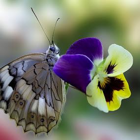 by Yunus ogut Ogut - Flowers Flowers in the Wild (  )