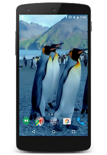 Penguins Video Live Wallpaper