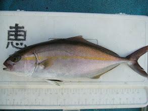 Photo: 獲れました。 3kgクラスのカンパチ・・い、いや ネリゴです。 このあともう1匹釣りました。