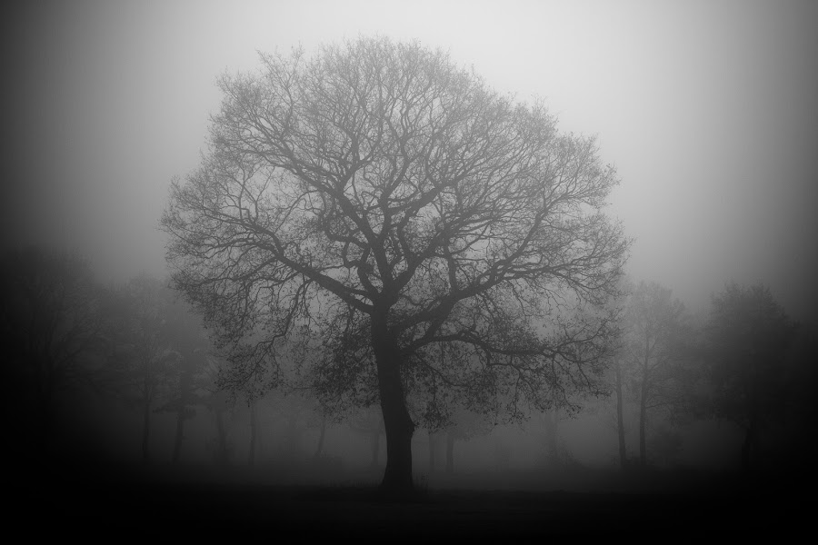 out of the dark by Sebastian Brüning - Nature Up Close Trees & Bushes