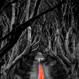 Dark Hedges by Aamir DreamPix - Digital Art Places ( forests, europe, ireland, tree, trees, forest, game of thrones,  )