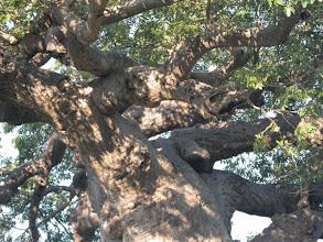 Photo: Gnarly tree