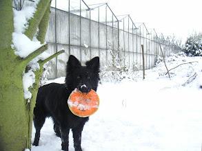 Photo: Angel, 28 wk, sneeuw achter. Mrt. 05