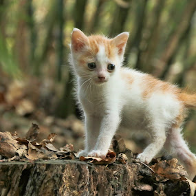 Little Tinky exploring the Bamboo Forest by Clarissa Human - Animals - Cats Kittens ( cats, kitten, little kittens, kittens, cute, exploring,  )