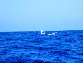 Photo: ご近所の船も、近くにいますが、たまに波で船が消えます。