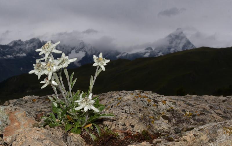 La Montagna e le sue Stelle. di gigidueelle