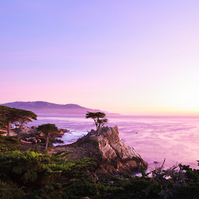 The Lone Cypress by Surentharan Murthi - Landscapes Waterscapes