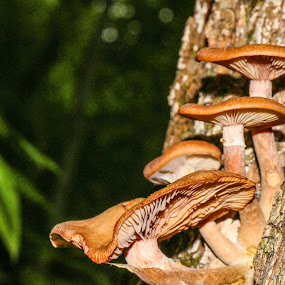 Srooms of the Long Trail 1 by Bob Minnie - Nature Up Close Mushrooms & Fungi
