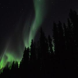 Dancing Lights by Rebecca Weatherford - City,  Street & Park  Night ( aurora borealis, northern lights, sky, nikon, alaska, nightscape, stars, aurora, trees )