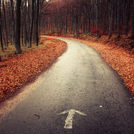 20171119-DSC_4107 by Zsolt Zsigmond - Transportation Roads ( autumn, arrow, trees, forest, road )