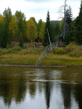 Photo: The reindeer fence down to the river...