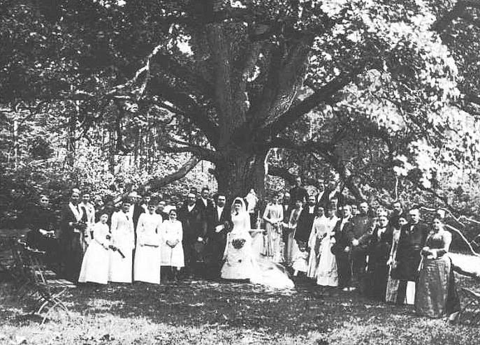 Carvalho do Noivo: A árvore com seu próprio endereço postal