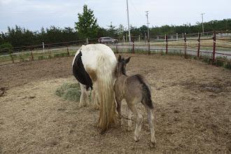 Photo: 2 weeks old  pestering Mom