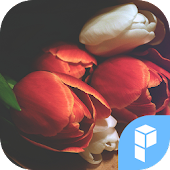 Tulip Bouquet launcher theme