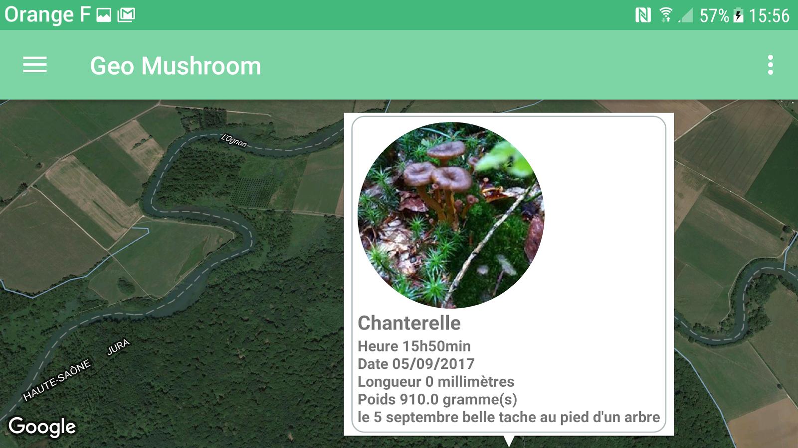 Geo Champignon (geo mushroom) cueilleur champignon