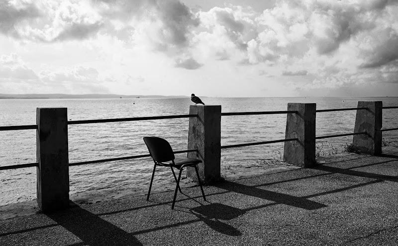 Un piccione solitario di tatyana_treus
