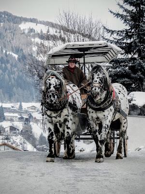 Cavalli Dalmatosi  di piccio_ne_ph