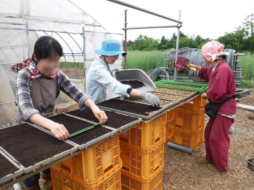籾まき。育苗箱に土を詰め、籾を播き、また土を載せ、平らにする作業を分業しました。3人で進めるとはやいはやい!
