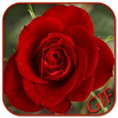 GIF Rose Collection