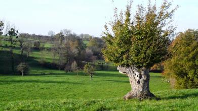 Photo: De sprookjesboom van Thérèse.