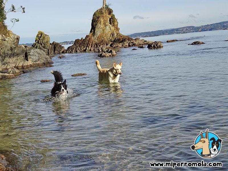 Senderismo con Perro Roteiro Mariñan en Sada, A Coruña con un Can de Palleiro y un Border Collie