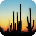 🌵 Cactus Wallpapers icon