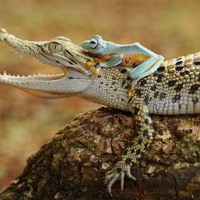 Best friends by Bernard Tjandra - Animals Reptiles