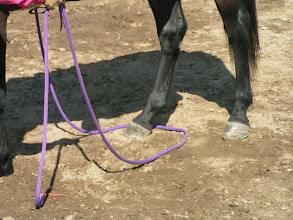Photo: Next, back the horse up one step.