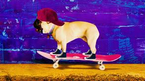 Funny Puppies thumbnail