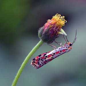 insect 2... 11-2012.jpg