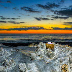 Still life in sunset by Fabrizio Contadini - Artistic Objects Still Life ( clouds, shell, sky, sunset, still life, nigth, sea, object, beach )