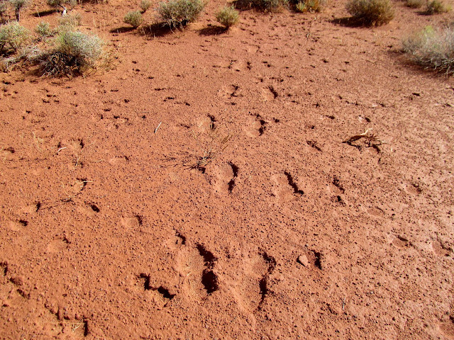 Human footprints coming and going