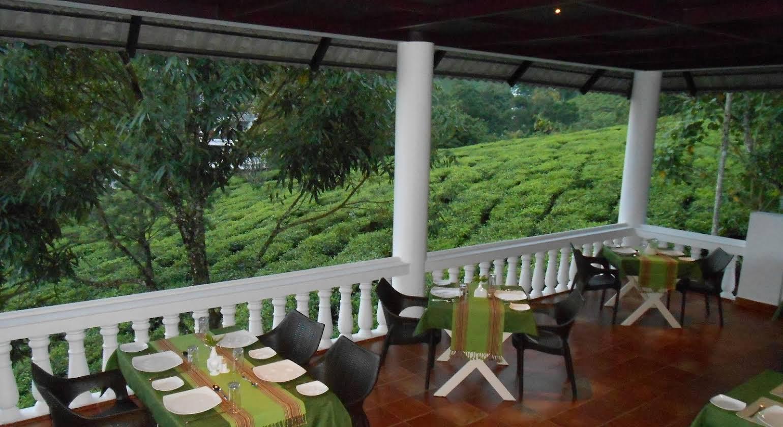 Tea Harvester Munnar