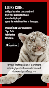 Tiger Selfie for Android- screenshot thumbnail