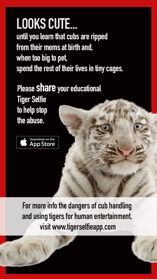 Tiger Selfie for Android- screenshot