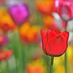 by Jiří Staško - Flowers Flower Gardens