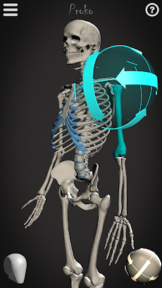 Skelly: Poseable Anatomy Modelのおすすめ画像1