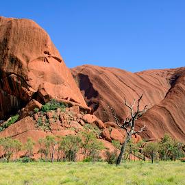 Dead tree in Uluru. by Sue Huhn - Landscapes Travel ( uluru, dead tree, ayers rock, australia, outback,  )