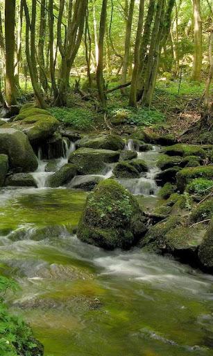 Beautiful brook in greenery