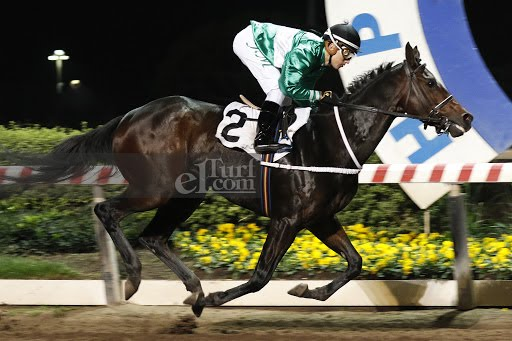 Che Cortito (Awesome Patriot) gana Handicap (1200m-Arena-HCH). - Staff ElTurf.com