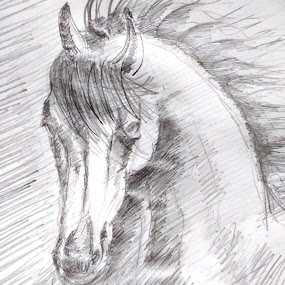 Horse Sketch... by Sandip Roy - Drawing All Drawing ( sketch, speed, horse, white, force, fast, portrait )