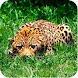Find animals - Androidアプリ