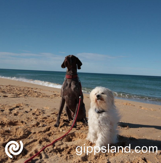 Dog friendly accommodations can offer a very suitable place to stay for a significant number of dog owners, these properties may provide pets with a kennel in a sheltered outdoor area and a securely fenced area for dogs to run around within