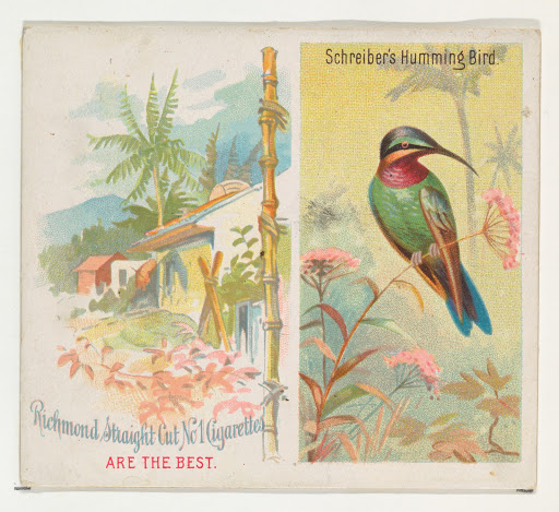 Schreiber's Hummingbird, from Birds of the Tropics series (N38) for Allen & Ginter Cigarettes