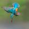 zibido martin tuffo aprile 2015 (1 di 1).jpg